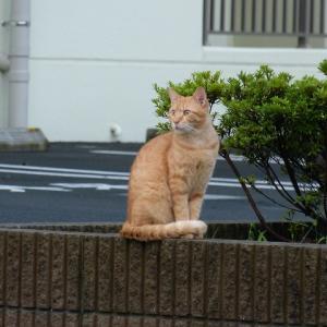 わし、猫のおっさんです 音してる!