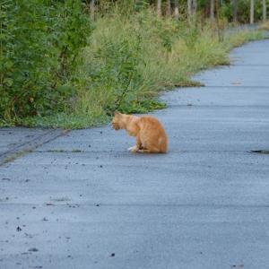 わし、猫のおっさんです だいぶ涼しなった・・・