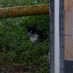 わし、子猫です レーザービームやど!
