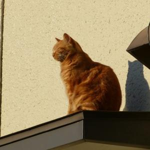 わし、猫のおっさんです 晴れたなぁ・・・