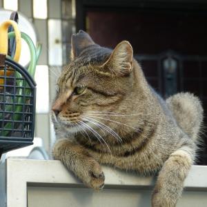 わし、猫のおっさんです 異常な~し!