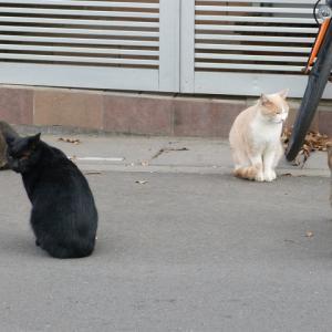 わしら、キジトラ一族と一緒に暮らしてる猫です 猫団子するほどの・・・