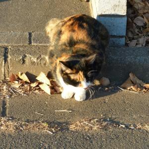 わし、猫のおばさんです 冷たい・・・