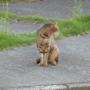 わし、中猫です えらい蒸してるなぁ・・・