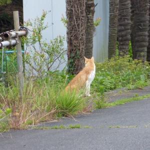 わし、猫のおっさんです えらい目ぇに合わされそうや・・・