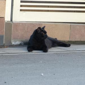 わし、猫のおっさんです  けっこうこたえるなぁ・・・