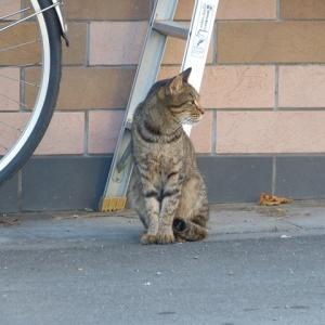 わし、猫のおっさんです 毎日えらいなぁ・・・