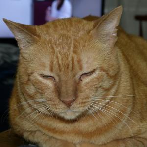 わし、猫のおっさんです 寝起き・・・