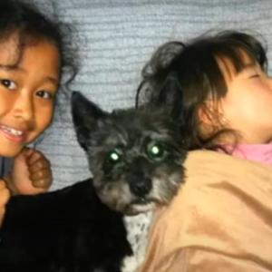 悲しい出来事 15歳高齢の犬マックスが死んだ!