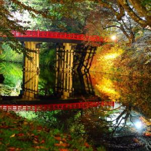 献杯の弘前城 菊と紅葉祭り2019