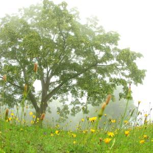 霧の萱野茶屋