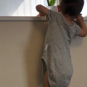 【1歳】どこでもよじ登る