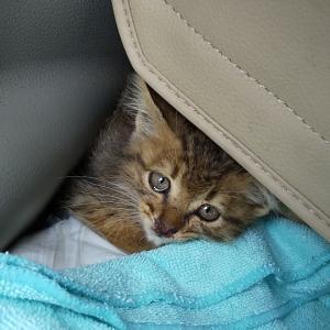 国道で拾った子猫のその後