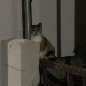 「この猫オードリー若林に似てる!w」J民「なにいってだこいつ」→