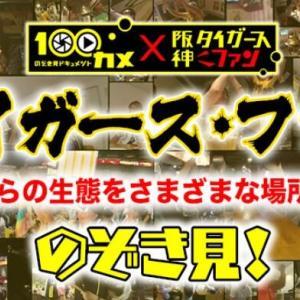 本日、ワイら阪神タイガースファン特集がNHKで放送されるで!