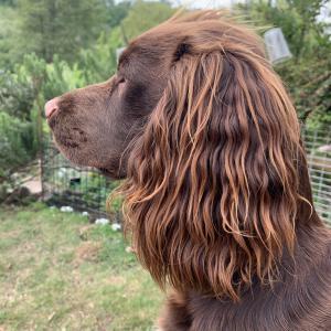 【画像】髪サラサラ犬wwwwwwwwww