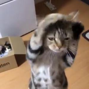 【動画】ネッコ、ちゅーる欲しさに踊り狂うwwwwwwwww
