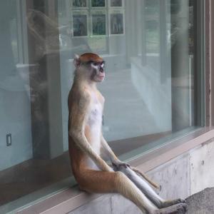 【画像】動物園行ってきたが暑さで猿が大変なことになってたwwwwwwwwwwwwwwwwwwwwwwwwwwww