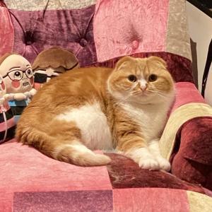 【悲報】HIKAKINの猫wwwwwwwwwwwwwww
