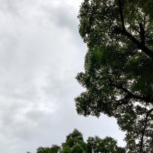 7月28日 Suicaは復活