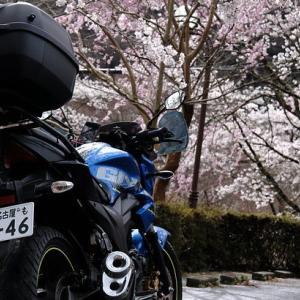 桜&ラツー(21/3/29)