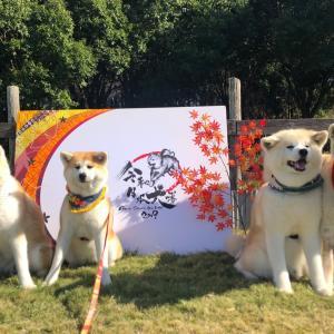 令和日本犬博☆ ①