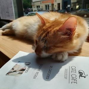 デュッセルドルフの猫カフェ Catz Cafeへ