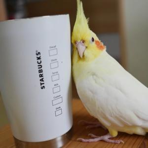 心のよりどころカップに☆とんがり