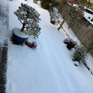 大雪!!四季を感じる日々に。