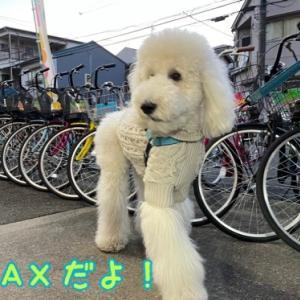 MAXとあおい☆