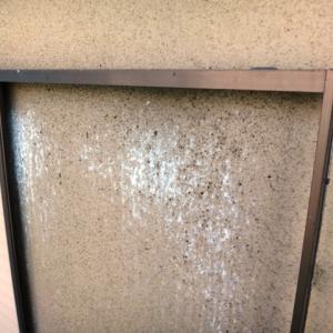 リシン外壁のコウモリ対策