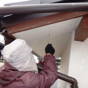 軒天井にコウモリの糞体積
