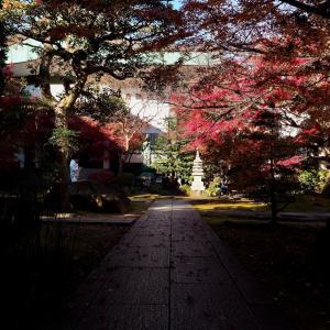 名古屋 禅隆寺の紅葉