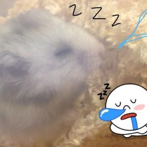 おやすー!
