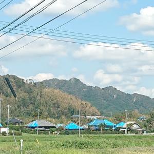 台風被害を越えて。千倉マダイ五目は魚種豊富