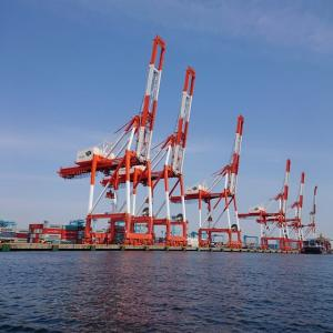 東京湾は春爛漫、鯵爛漫