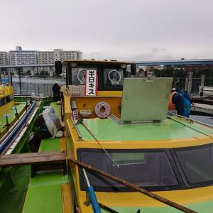 冷たい雨に打たれて。東京湾の落ちギス