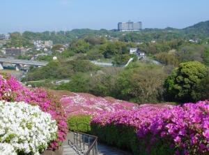 つつじの丘と武山