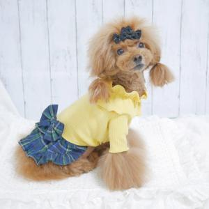 犬服モニターモデルさんしました♪