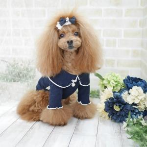 犬服♪ カツラギジャンパースカート&フリルラウンドTシャツ