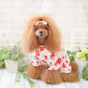 犬服♪noutti フラワーリボンワンピースとバレッタ