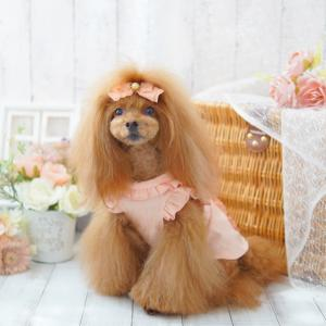 犬服♪ フリルリネンブラウス