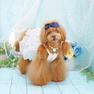 犬服♪ coco chien 「ネイビードットワンピース」