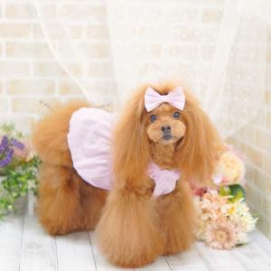 犬服♪フローラルワンピース