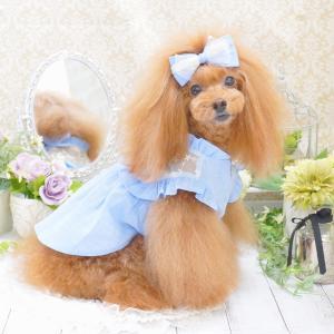 犬服♪It's sunny outside「Lace see-thru ops(ワンピース)」
