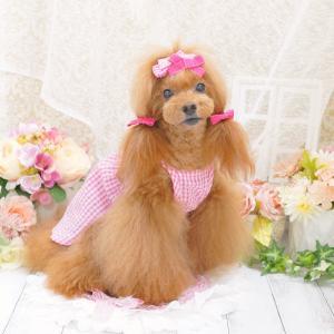 犬服♪Check ribbon one-piece(チェックリボンワンピース)