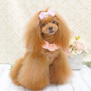 犬用品♪ 2WAYフラワーチョーカー
