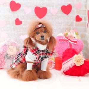 犬服♪【VELY&MORE】Merry Check OPS&バレッタ