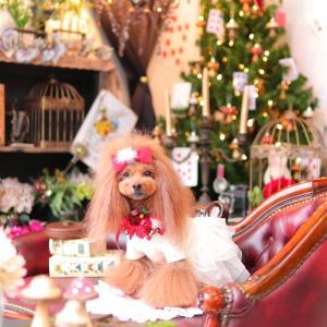 クリスマスコニワンー1