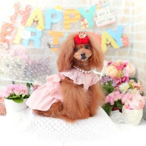犬服♪【Opaaap】Lace Overall Dress